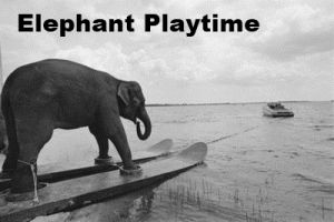 Elephant Playtime logo