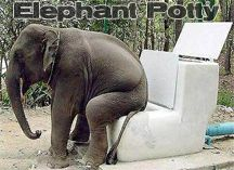 Elephant Potty