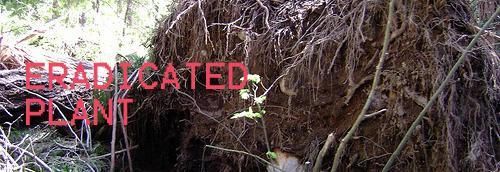 Eradicated Plant logo