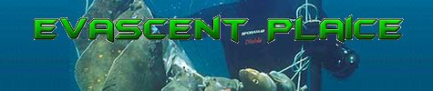 Evascent Plaice logo