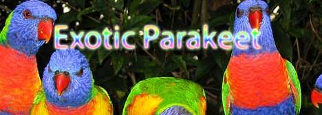 Exotic Parakeet logo